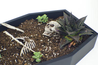 Coffin Planter Halloween Decorating Idea