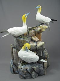 Northern Gannets, Part Two