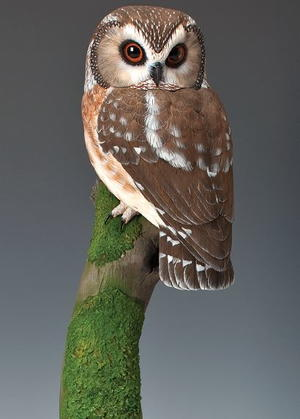 Saw-whet Owl, Part Two