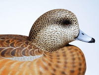 Carve and Paint an American Wigeon Hen, Part Four