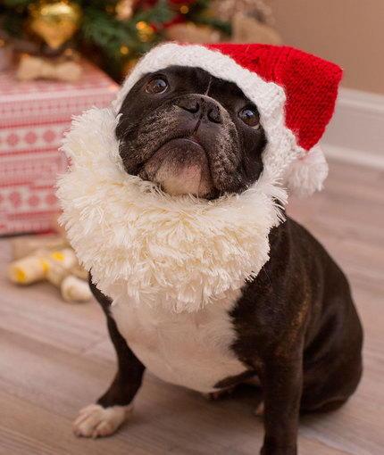 Santa Doggie Hat And Beard Allfreeknitting Com