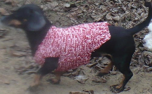 Cozy Doxie Dog Sweater