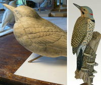 Grounded: A Northern Flicker