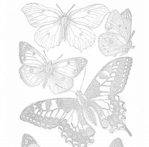 Delicate Butterfly Adult Coloring Pages ...