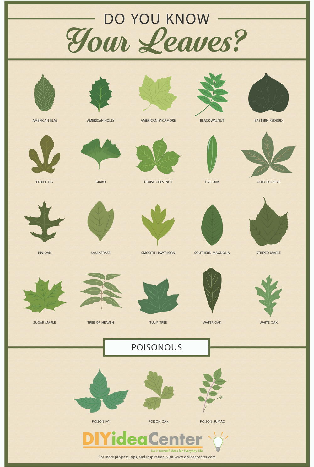 Leaf Identification Guide DIYIdeaCentercom