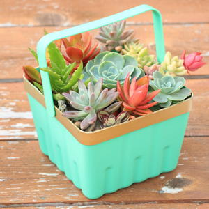 Save It with Succulents DIY Planter