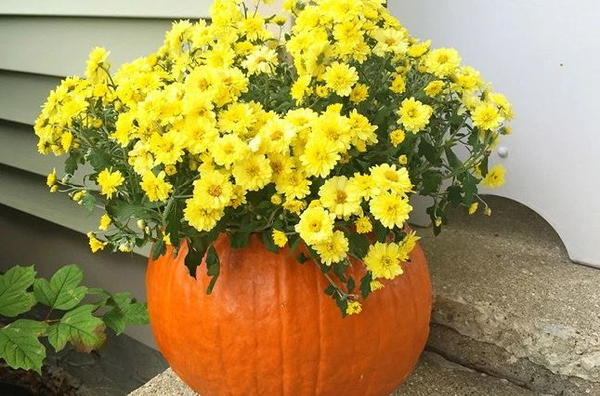 Pumpkin DIY Flower Vase