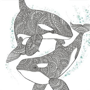 Orca Whale Coloring Page