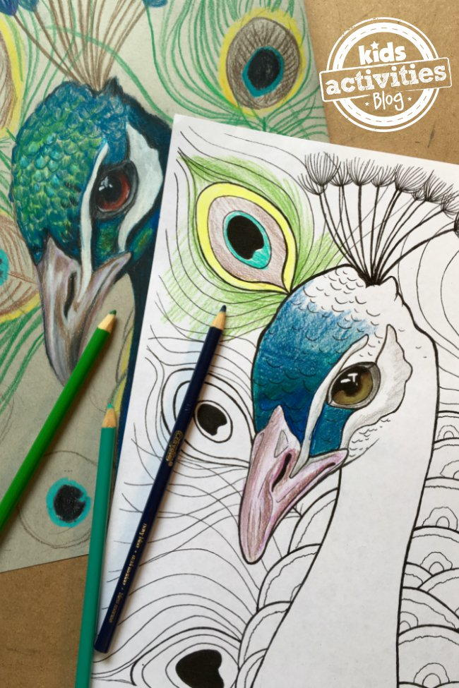 Peacock Coloring Page FaveCrafts