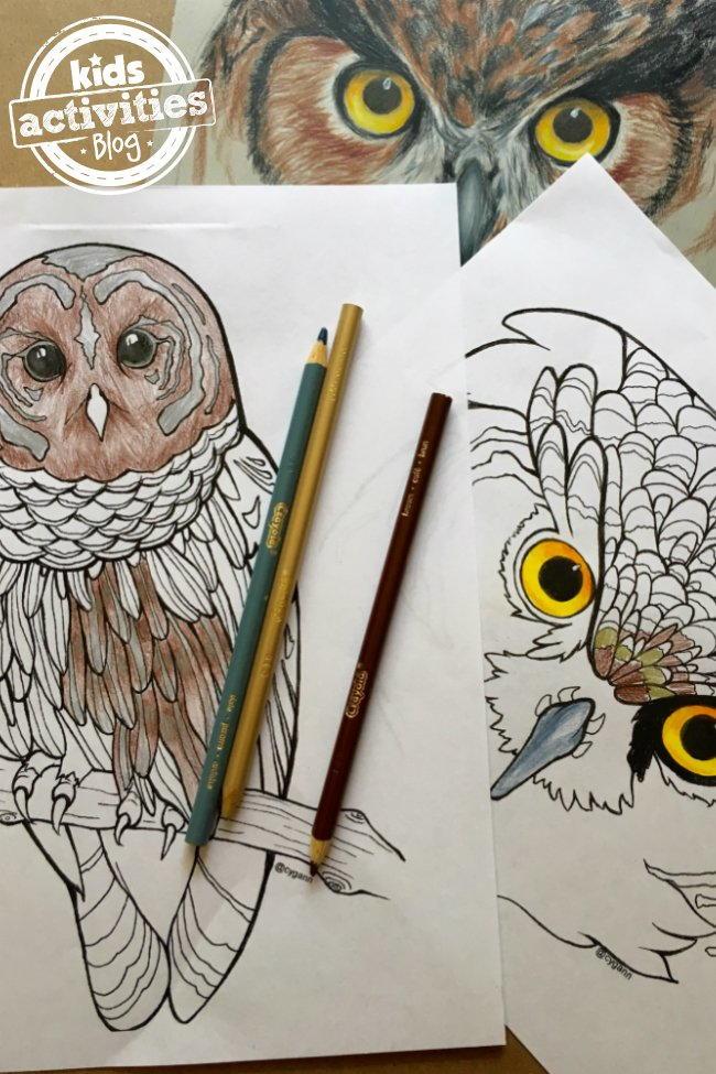 Realistic Owl Coloring Pages | FaveCrafts.com