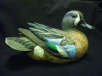 Blue-Winged Teal Drake Painting