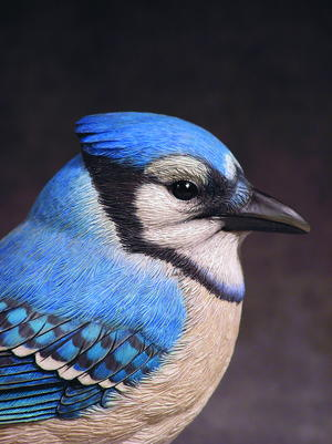 East Meets West, Part Two: The Eastern Blue Jay