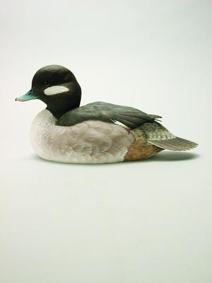 Bufflehead Hen Part 3