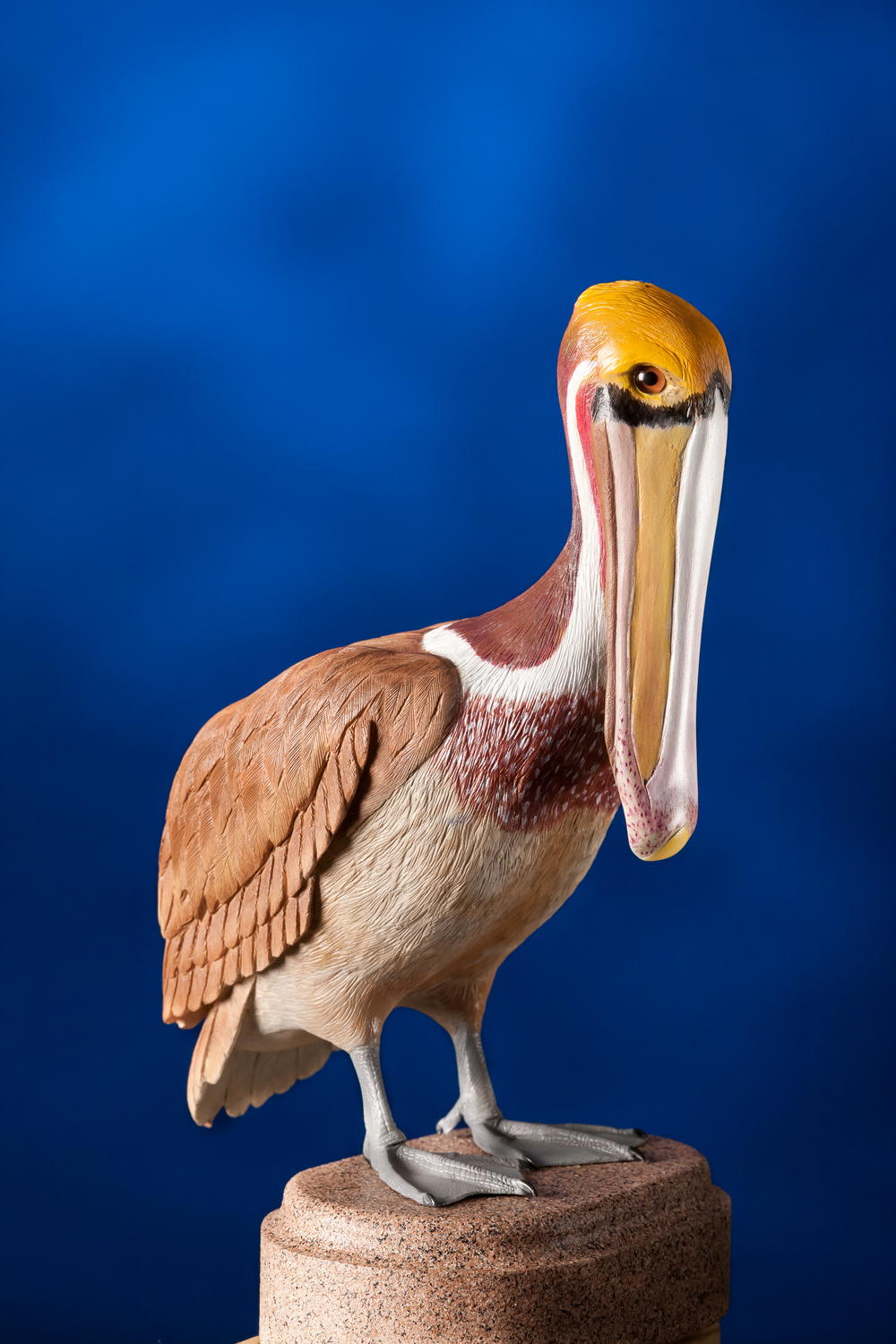 West coast brown pelican carving wildfowl