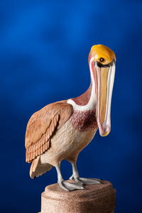 West Coast Brown Pelican Carving