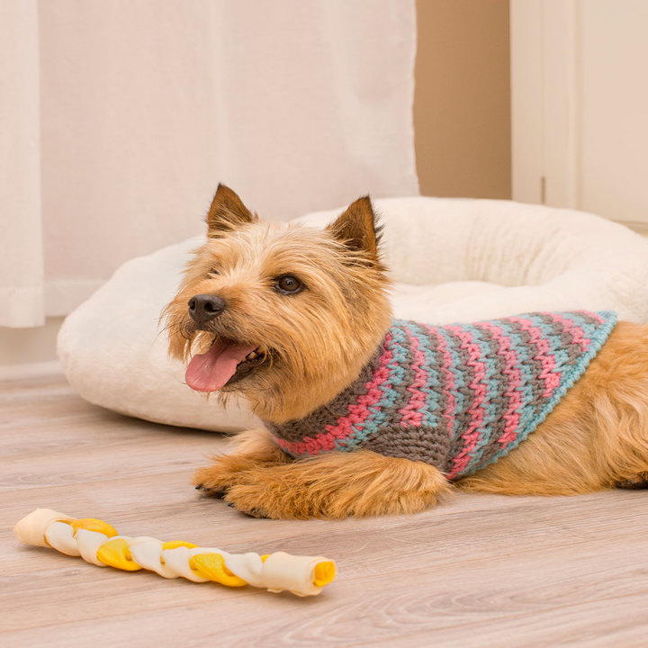 La Di Da Dog Sweater Allfreecrochet Com