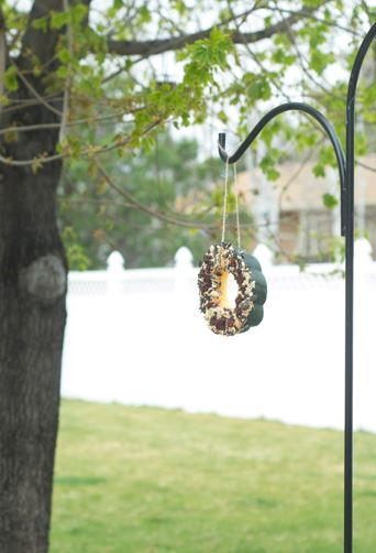Acorn Squash Homemade Bird Feeder