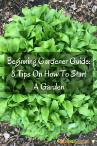 Beginning Gardener Guide: 8 Tips On How To Start A Garden