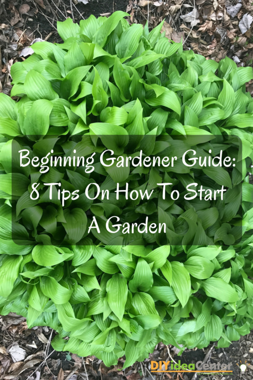 Beginning Gardener Guide 8 Tips On How To Start A Garden