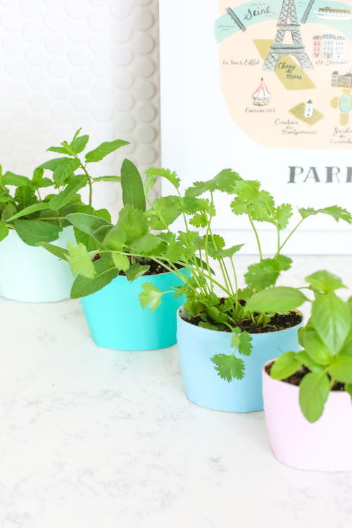 Recycled Indoor Herb Garden