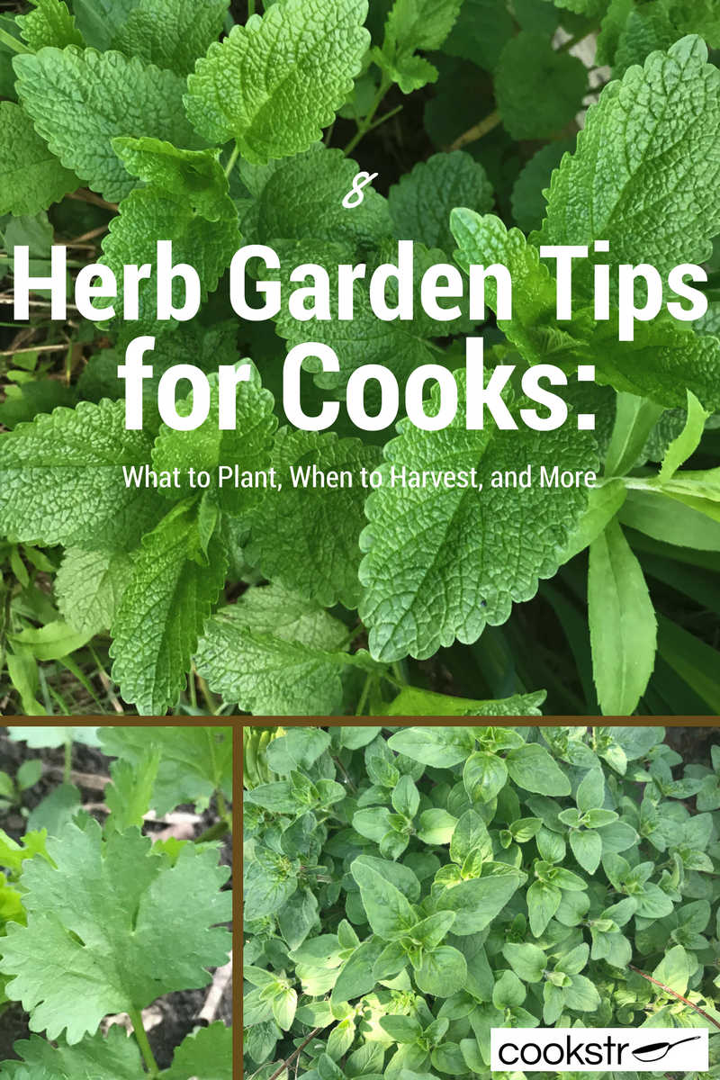8 Herb Garden Tips For Cooks: What To Plant, When To Harvest, And More |  Cookstr.com