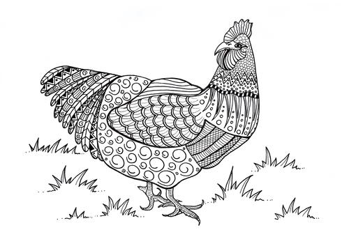 Colorful Chicken Adult Coloring Page Favecrafts Com