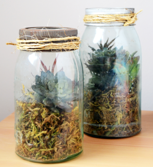 DIY Terrarium in a Mason Jar