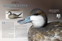 Ruddy Love: How to Carve a Ruddy Duck, Part One