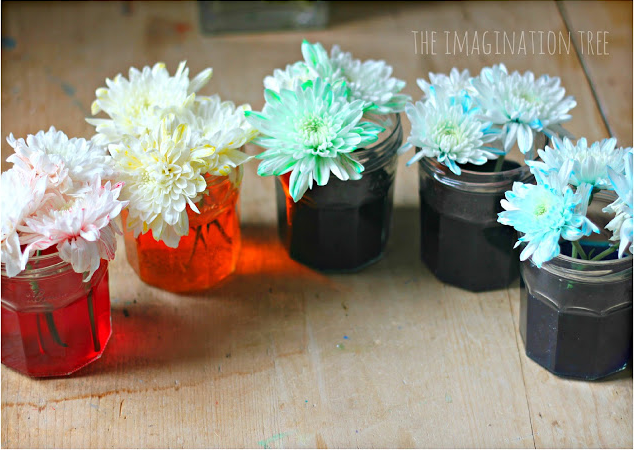 Amazing color changing flowers experiment for Color changing roses