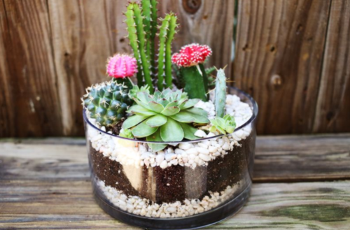 Simple DIY Succulent and Cacti Garden