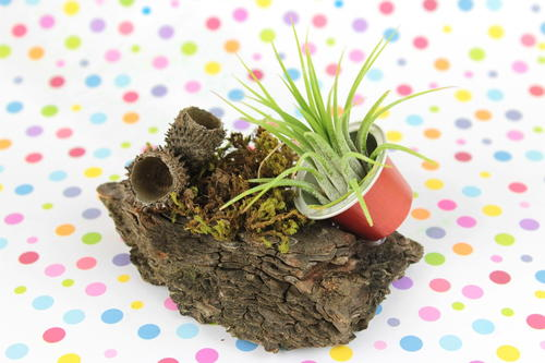 Woodland Espresso Cup Airplant Planter