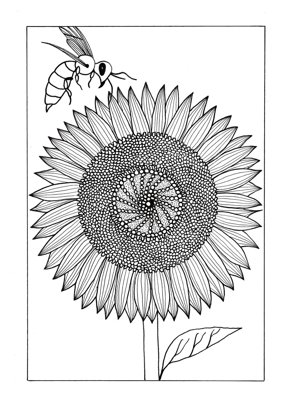 Vividly Intricate Sunflower Adult Coloring Page ...
