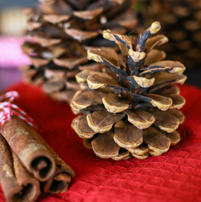 Cinnamon Scented Pinecones