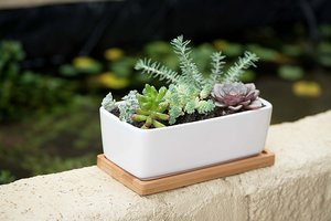 DIY Succulent Planter Pot Giveaway