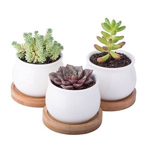 Spring Succulent Planter Pot Set Giveaway