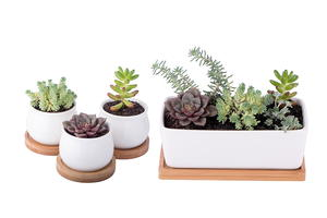 Calming Succulent Planter Set Giveaway