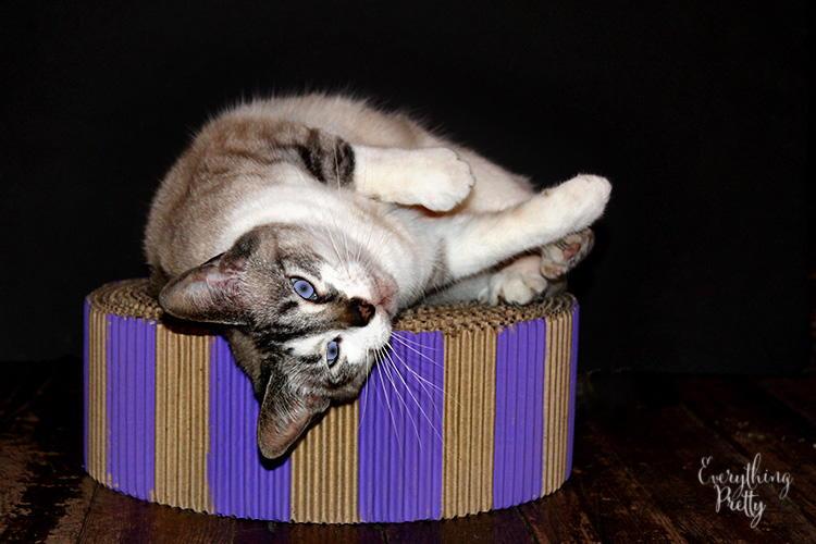 Cat bed or scratcher - Cat bed scratcher ...
