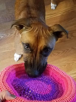 Crochet Frisbee Pattern for Pup or Tot