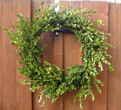 Easy Boxwood Christmas Wreath