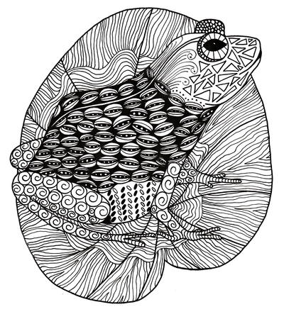 Intricate Zentangle Frog Adult Coloring Page