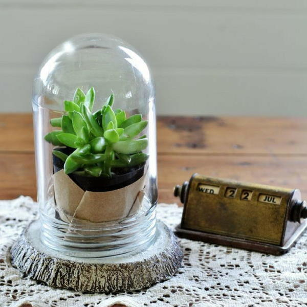 Wood Slice DIY Terrarium