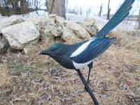 The Black-billed Magpie Part Two: Painting
