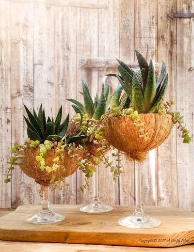 Awesome Coconut Wine Glass Planters