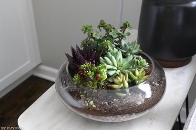 Diy Succulent Terrarium Diyideacenter Com
