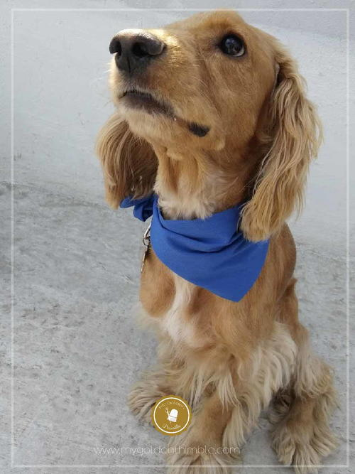 DIY Bandana for Dogs