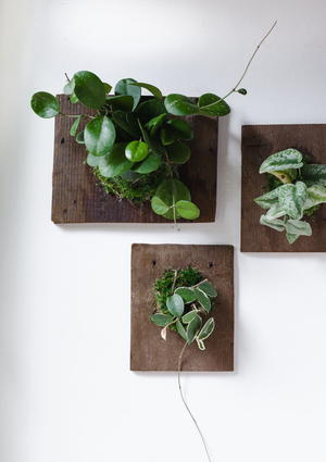Wall-Mounted House Plants