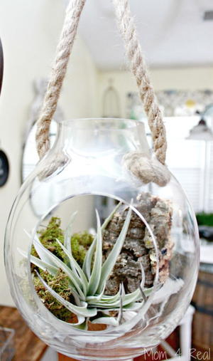 Growing and Caring for Air Plants Tutorial