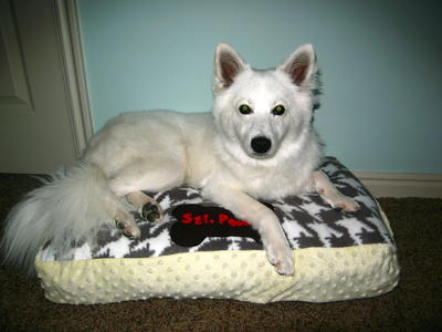 Personalized DIY Dog Bed