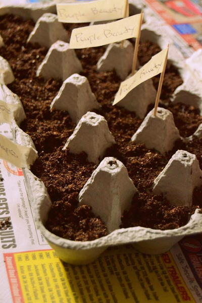 Egg Crate Seed Starters