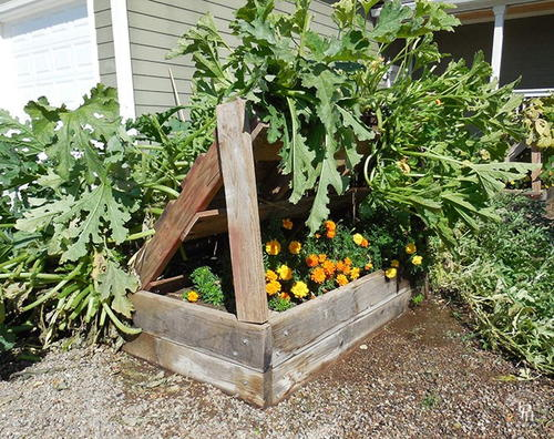 Wood Pallet Squash Growing Racks